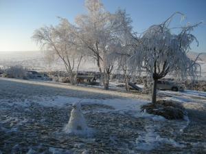 2013 frosty morn 002